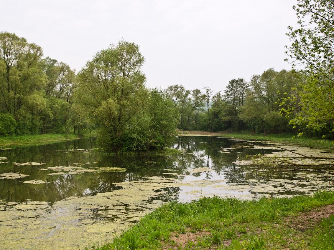 Das Biosphärenreservat Bliesgau liegt im Sudosten des Saarlands, an der Grenze zu Rheinland-Pfalz und zu Frankreich. Die leicht hügelige Landschaft des Bliesgaus nutzt der Mensch seit Jahrtausenden. Sie ist geprägt durch wertvolle Streuobstbestande, verschiedene artenreiche Wiesen, ausgedehnte Buchenwälder und eine Auenlandschaft, die durch das Flusschen Blies durchzogen wird. Der Norden des Bliesgaus ist städtisches Einzugsgebiet; mit einer Bevölkerungsdichte über dem Bundesdurchschnitt ist der Bliesgau insgesamt im Vergleich zu den anderen deutschen Biosphärenreservaten eher städtisch geprägt. Die Stadt-Land-Beziehung mit all ihren Facetten, Einflüssen und Veränderungen ist deshalb einer der Schwerpunkte in der wissenschaftlichen Forschung.