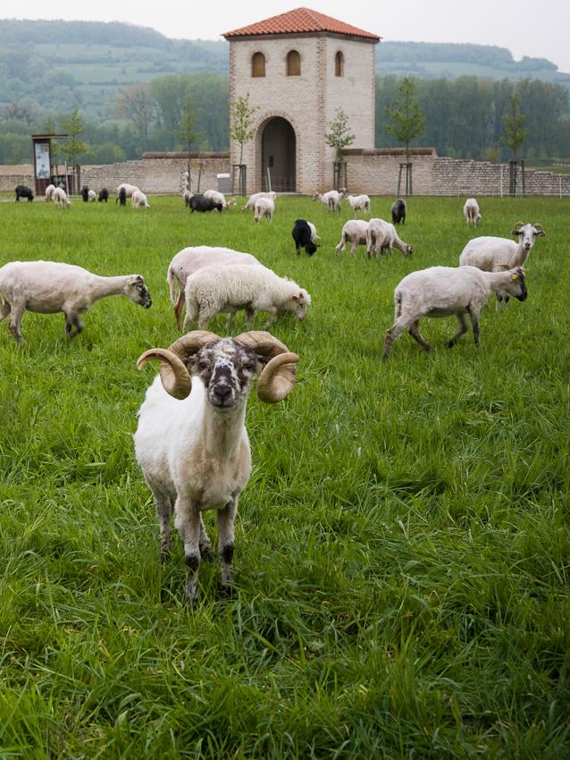 Am 26. Mai 2009 wurde der Bliesgau durch die UNESCO als deutsches Biosphärenreservat anerkannt. Das Biosphärenreservat Bliesgau liegt im Südosten des Saarlands, an der Grenze zu Rheinland-Pfalz und zu Frankreich. Eine besondere Rolle bei der Erhaltung und Pflege der Kulturlandschaft Bliesgau spielt ihre Beweidung durch Rinder, Schafe und Ziegen. Durch eine extensive Beweidung wird der Erhalt der landschaftlichen Eigenarten gesichert und die Lebensbasis von bedrohten Tier- und Pflanzenarten sicher gestellt. Durch den Einsatz von Haustierrassen, die vom Aussterben bedroht sind wie die Thüringer Waldziege und andere in Reinheim, leistet die Naturlandstiftung Saar einen weiteren Beitrag zur Arterhaltung im Bliesgau. Reinheim an der deutsch-französischen Grenze ist mit etwa 1100 Einwohnern der zweitgrößte Ort der Gemeinde Gersheim im Saarland. Reinheim liegt im Bliesgau am Ende des etwa 16 km langen Bliestal-Freizeitweges, der in Blieskastel beginnt und auf der Trasse der ehemaligen Bliestalbahn verläuft.
