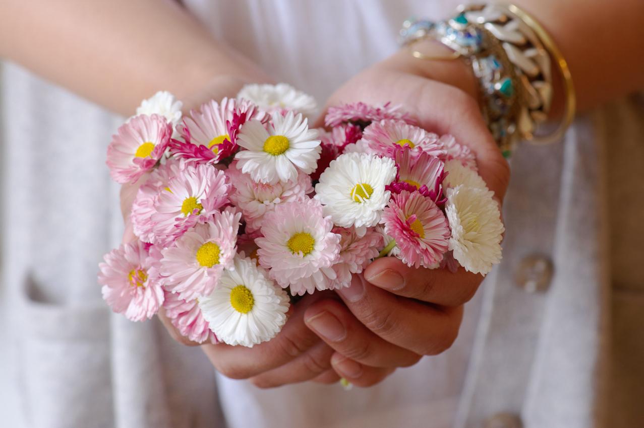 """Die Blüten, die in der Firma """"Evers & Tochter Manufaktur"""" verarbeitet werden, stammen ausschließlich aus dem eigenen Garten und den Garten von Verwandten und Freunden aus der Nachbarschaft. Sie werden frisch geerntet und sofort verarbeitet, Hier trägt die Tochter Dana Evvers behutsam Tausendschönchen aus dem Garten zum Weiterverarbeiten ins Haus"""