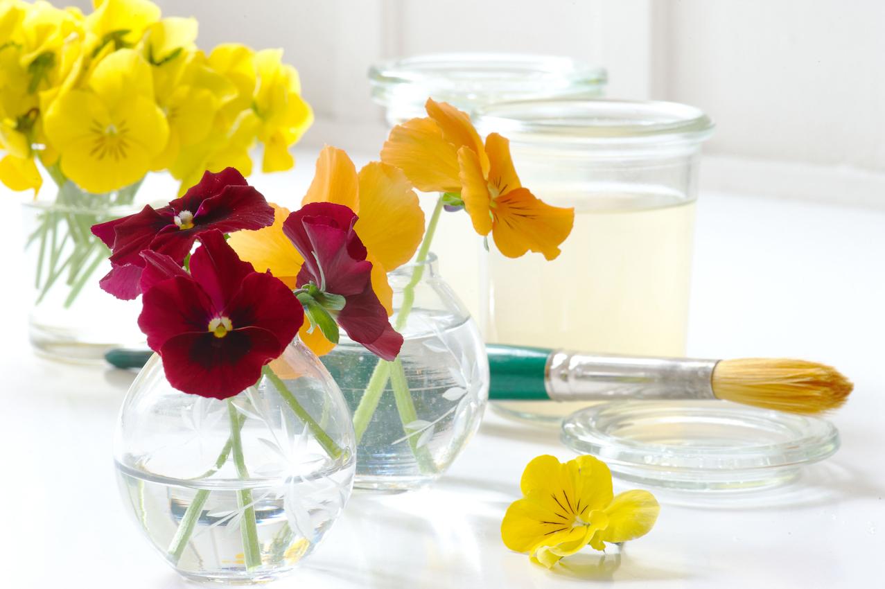 """Die Blüten, die in der Firma """"Evers & Tochter Manufaktur"""" verarbeitet werden, stammen ausschließlich aus dem eigenen Garten und den Garten von Verwandten und Freunden aus der Nachbarschaft. Diese Hornveilchen stammen aus dem eigenen Garten, es gibt sie in allen möglichen Farben und Farbkombinationen. Im Hintergrund steht ein Glas mit der Tinktur bereit, mit der sie bepinselt werden"""
