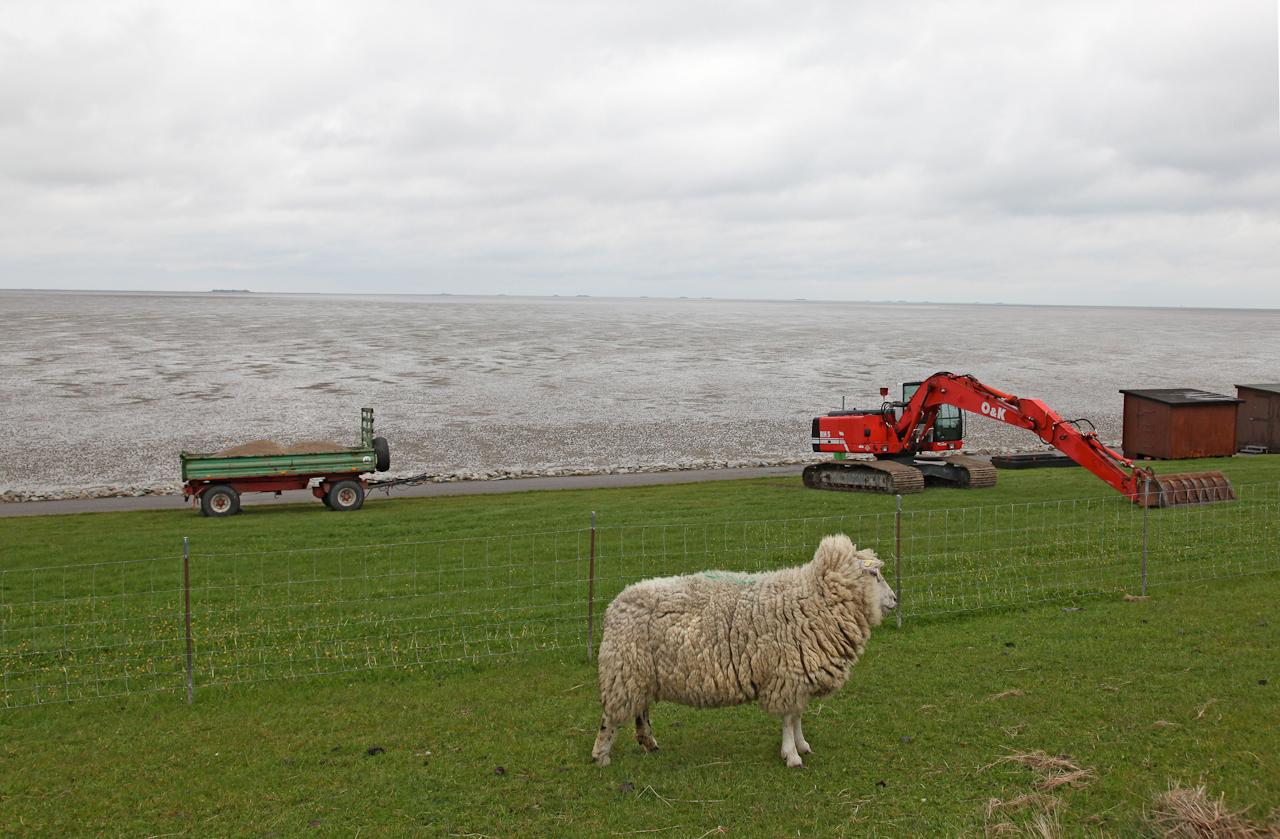 DEU/SH, Dagebuell, zwischen Muschelfabrik und Inselparkplatz. Der gruene Strand von Dagebuell ist eine Wiese mit Schafen.