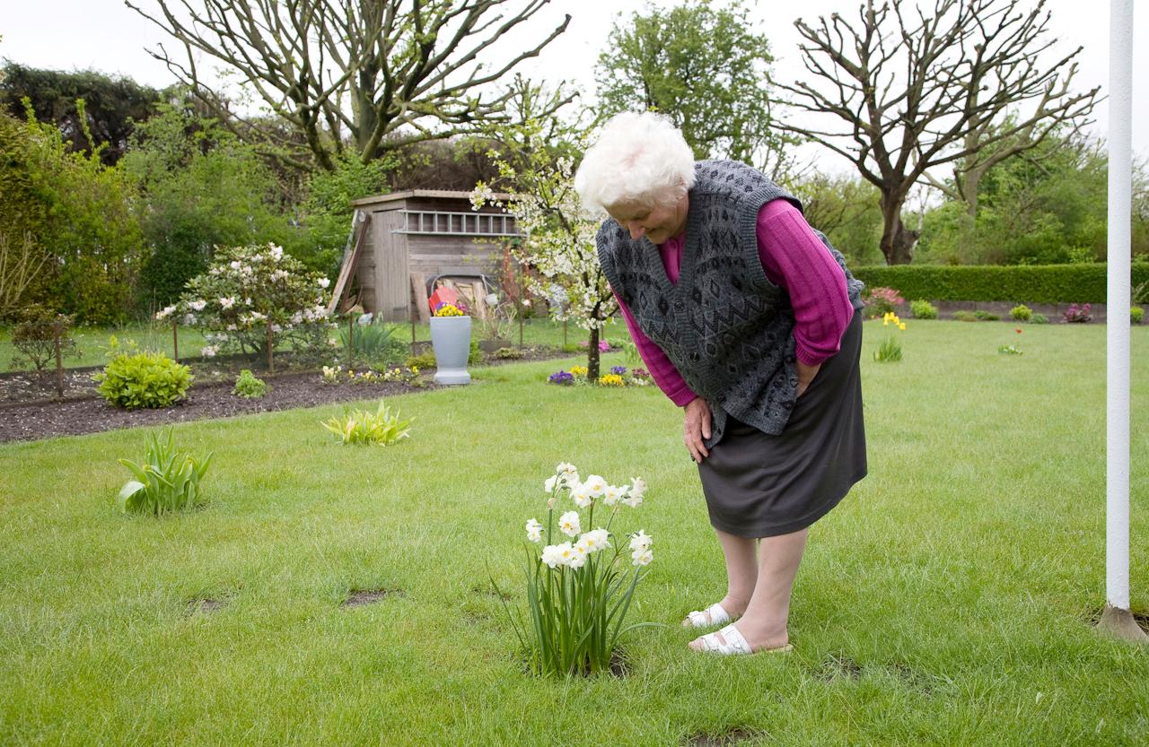 Brunhilde B. freut sich uber die Narzissen in ihrem Garten. Kleingartenverein Tarpenhoh in Hamburg-Niendorf, 7. Mai 2010