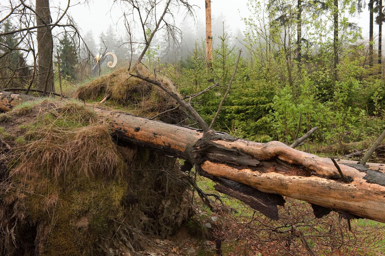 """Kunst versteckt sich im Urwald. ,,Der Krummstab"""" heißt die 7,50 m große Skulptur von Heinrich Brummack, die ganz im Hintergrund aus einer Waldparzelle bei Schmallenberg-Schanze im Sauerland herausleuchtet, in der keine Forstwirtschaft mehr betrieben wird. Der Krummstab ist eine von insgesamt 11 modernen Großplastiken am Waldskulpturenweg von Bad Berleburg nach Schmallenberg.  - Dieses Bild wurde am 07.05.2010 um 16:56:34 Uhr in Schmallenberg-Schanze (Sauerland, Deutschland) aufgenommen."""