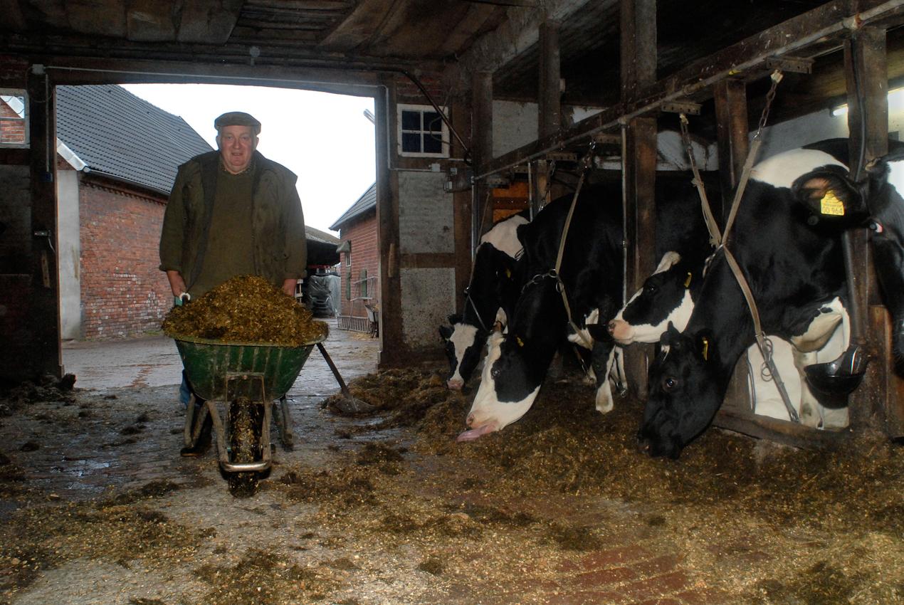 49638 Nortrup, Niedersachsen, Bauernhof mit Milchwirtschaft, Karrenweise Silofutter