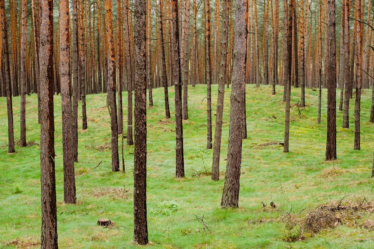 Wald bei Nauen/Brandenburg.