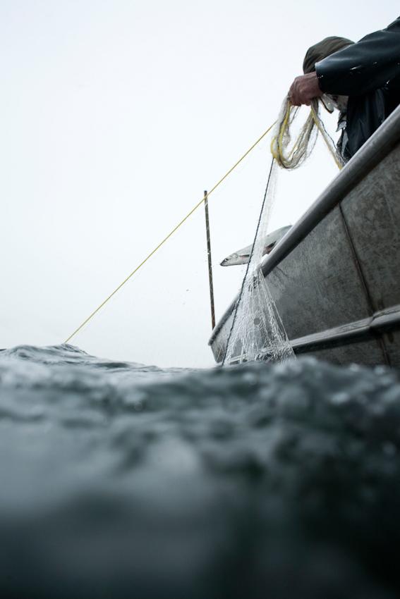 Der Fischer Johann Schuster holt am Vormittag des 7. Mai 2010 auf dem Starnberger See sein Netz mit einer Renke ein.
