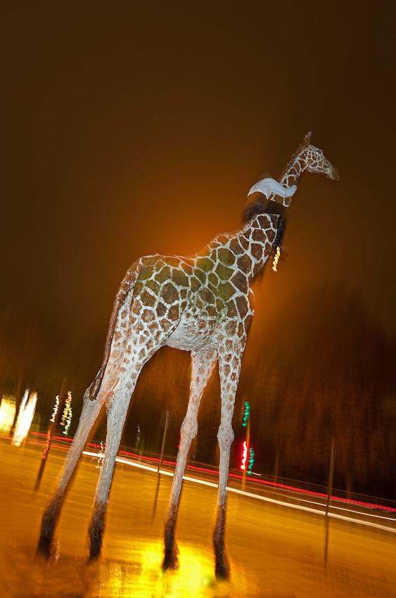 Am 7. Mai zwischen 22.40 und 23.00 Uhr fuhr ich dort zufällig mit dem Auto vorbei und ich traute meinen Augen nicht - die Giraffe schien sich tatsächlich zu bewegen...