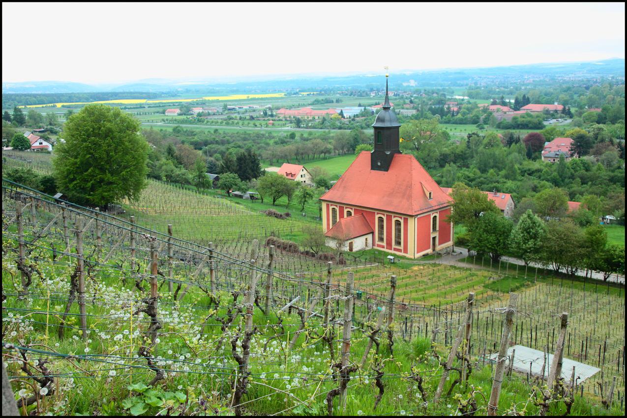 Der Weinberg und die Weinbergkirche zu Pillnitz. Diese ist nicht weit vom Pillnitzer Schloss entfernt, welches das ganze Jahr ein beliebtes Ausflugsziel ist. Immer mehr Weinliebhaber treffen sich in den zahlreichen Weinbergen in Sachsen, um gemeinsam am sächsischen Weinwandertag teilzunehmen und Wissenswertes um und über die verschiedenen Weine zu lernen.