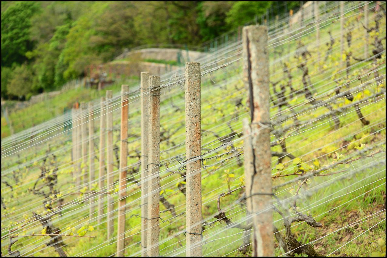 Befestigungen um und im Weinberg zu Pillnitz.