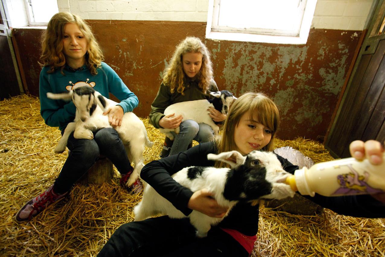 11:02 Uhr: Paula, Schülerin der Klasse 7a, füttert das von seiner Mutter verstoßene drei Wochen alte Ziegenlamm Maggi.