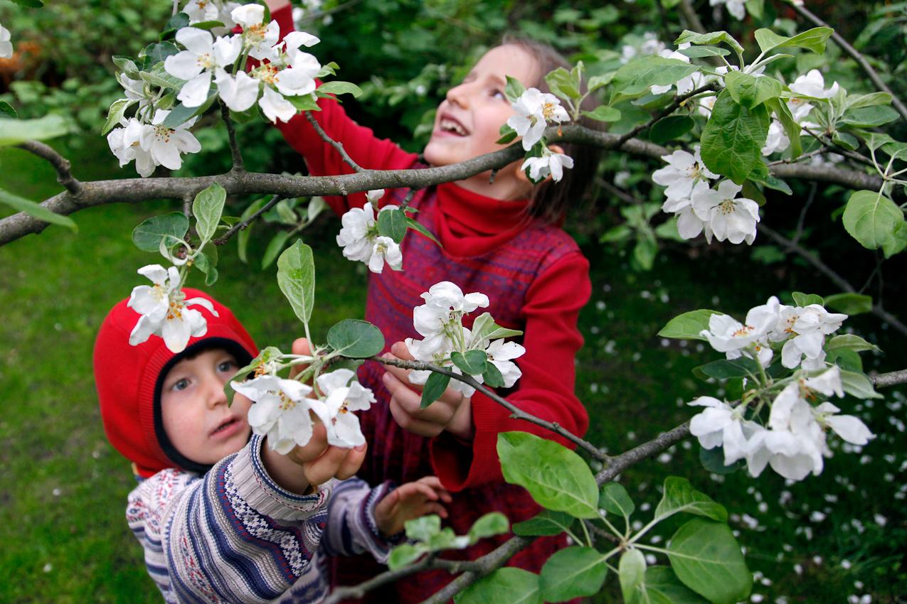 18:36 Uhr: Bei Temperaturen um die 10 Grad genießen Kaya, 8, und ihr dreijähriger Bruder Joshua den Frühling unter einem blühenden Apfelbaum auf der Insel Valentinswerder im Tegeler See in Berlin-Reinickendorf.