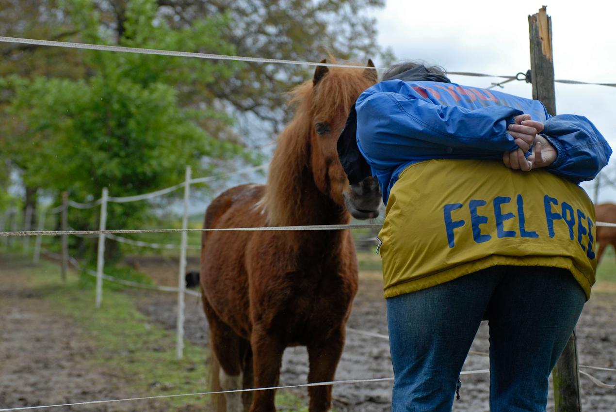 Feel Free, nur das Pony Caruso steht hinter dem elektrisch geladenen Zaun.