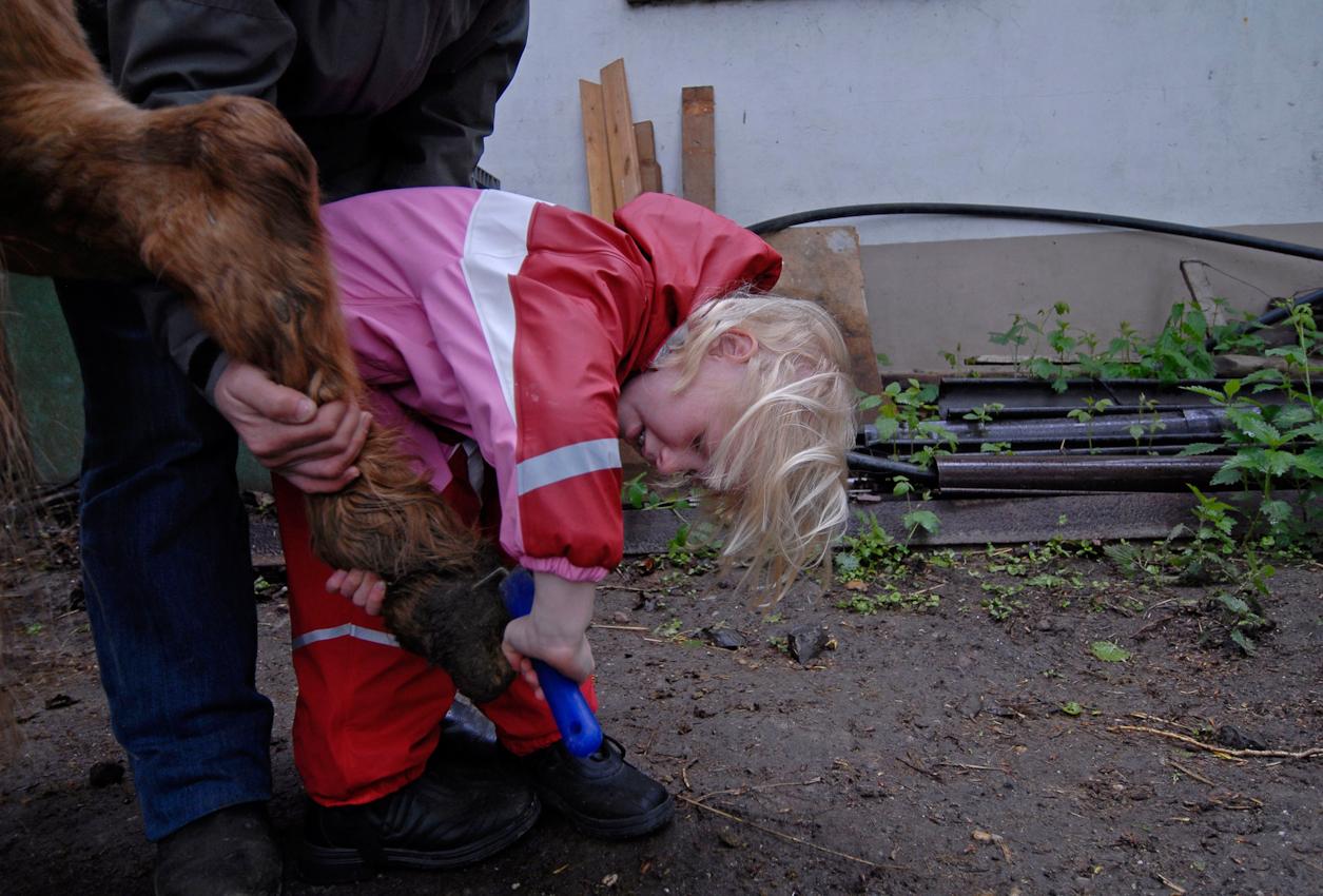 Auch Pferde müssen täglich geputzt werden: Anna Braune strengt sich ordentlich an, dass die Hufe schön sauber werden.