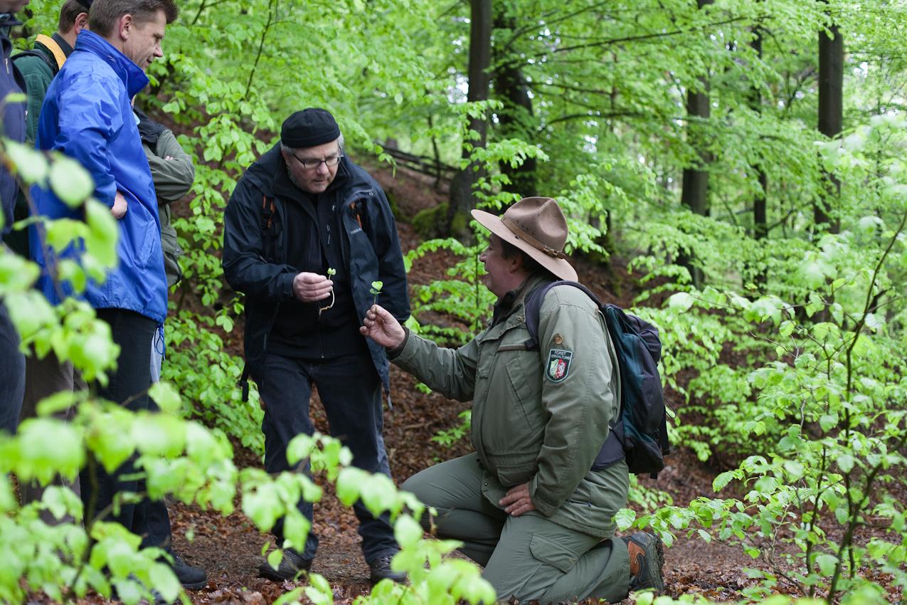 Korrelation: Die Buche bekommt als ursprüngliche Bewohnerin der Eifel heute wieder die bevorzugte Chance, dichte Wälder zu bilden. Im Bild (v.l.): Uwe Hoffmeister und Klaus Fröhlich.