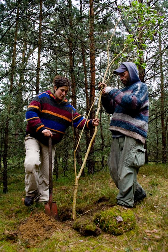 Ein Ziel der Kesselberger ist es, den zum Grundstück gehörenden Wald zu lichten und durch das Pflanzen verschiedener Bäume die Kiefermonokultur in einen Mischwald zu verwandeln. Das Foto zeigt Kai und Katrin beim Pflanzen von Flieder.