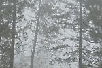 Waldskulpturenweg
