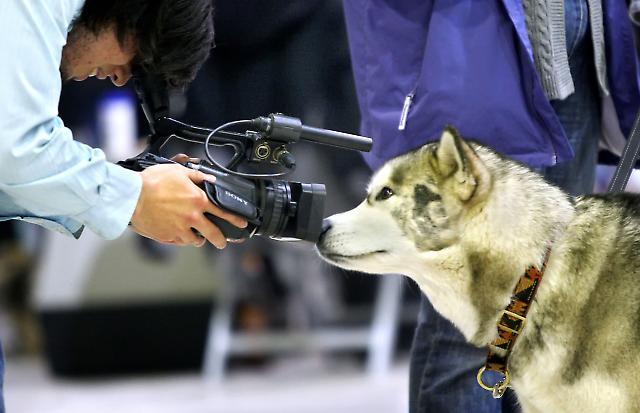 Hund- & Heimtiermesse 3