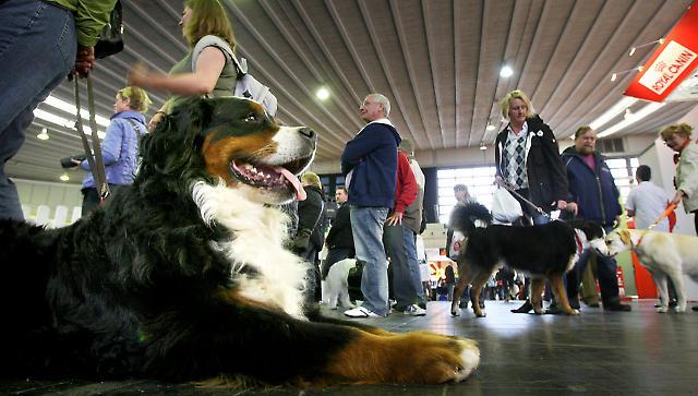 Hund- & Heimtiermesse 4