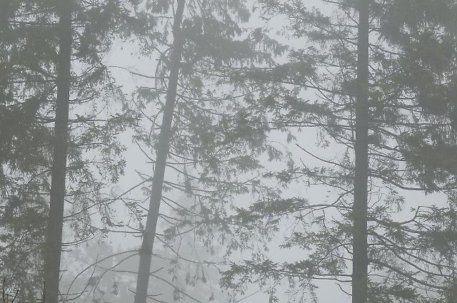 Waldskulpturenweg 1
